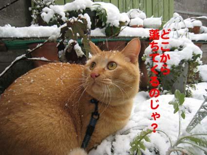 120126_雪3.jpg