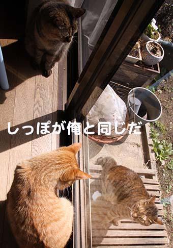 160814_おーちゃん2.png